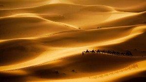 deserts-camel-sahara.adapt.945.1